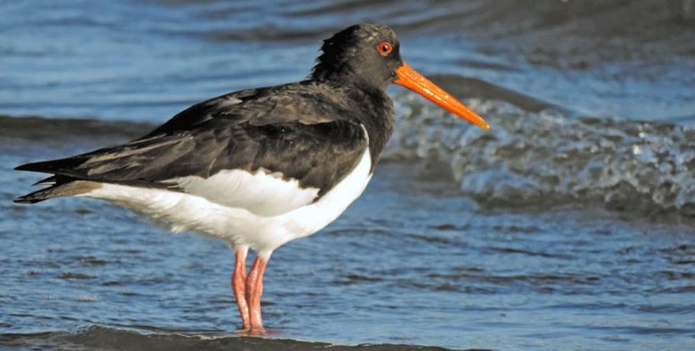 Little Bird at the Beach