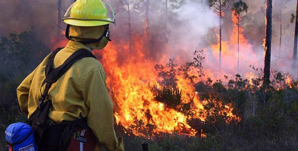 Control burn Apalachicola Florida