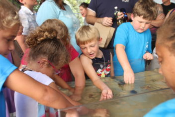 Estuaries Day touch tank