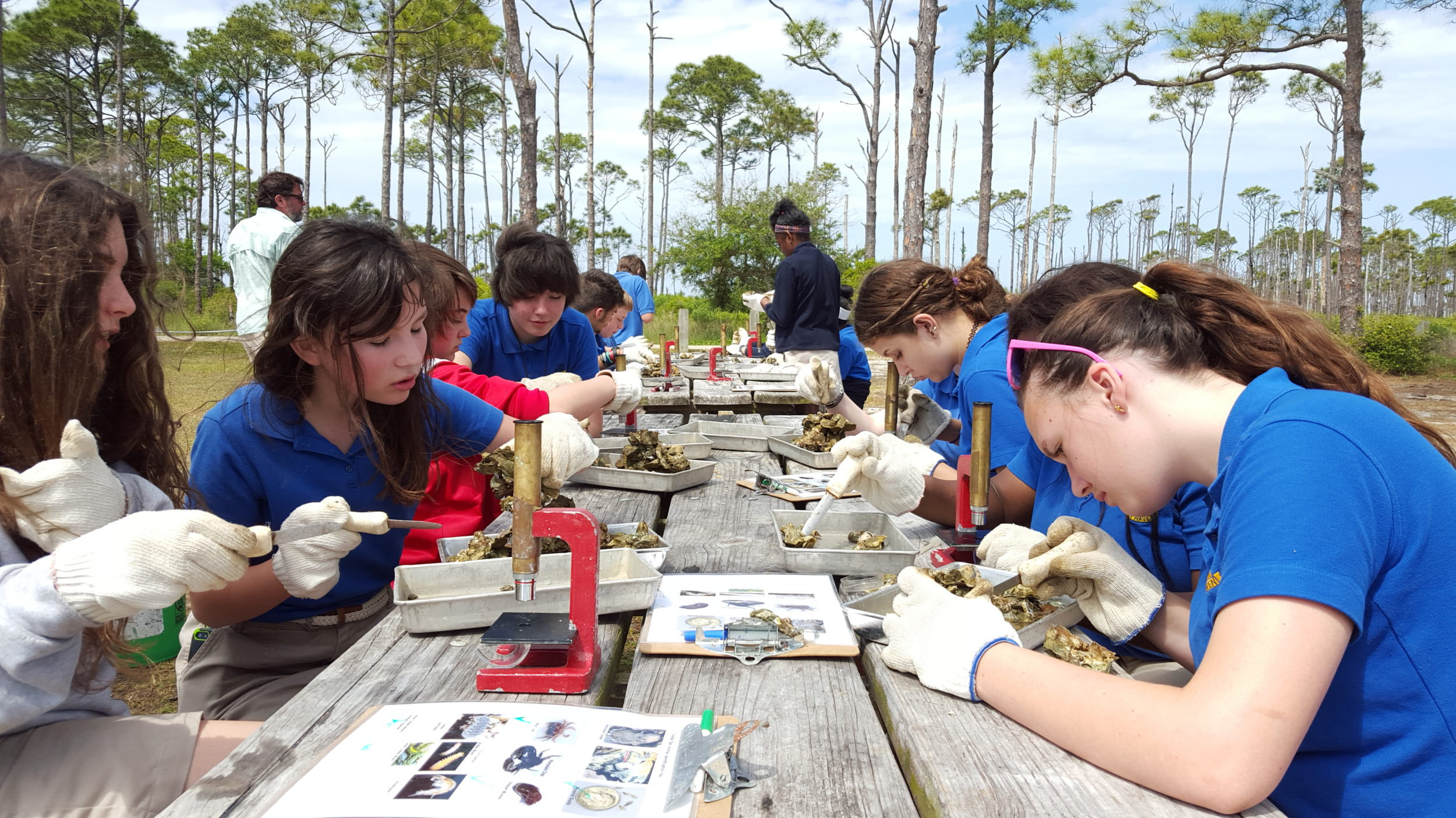 Students investigating oyster reef colonies
