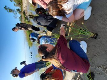 The primary focus of our school activities is our field programs with K-12 students and teachers in Franklin County. Here fifth-graders plant Spartina along a restored shoreline at Catpoint.