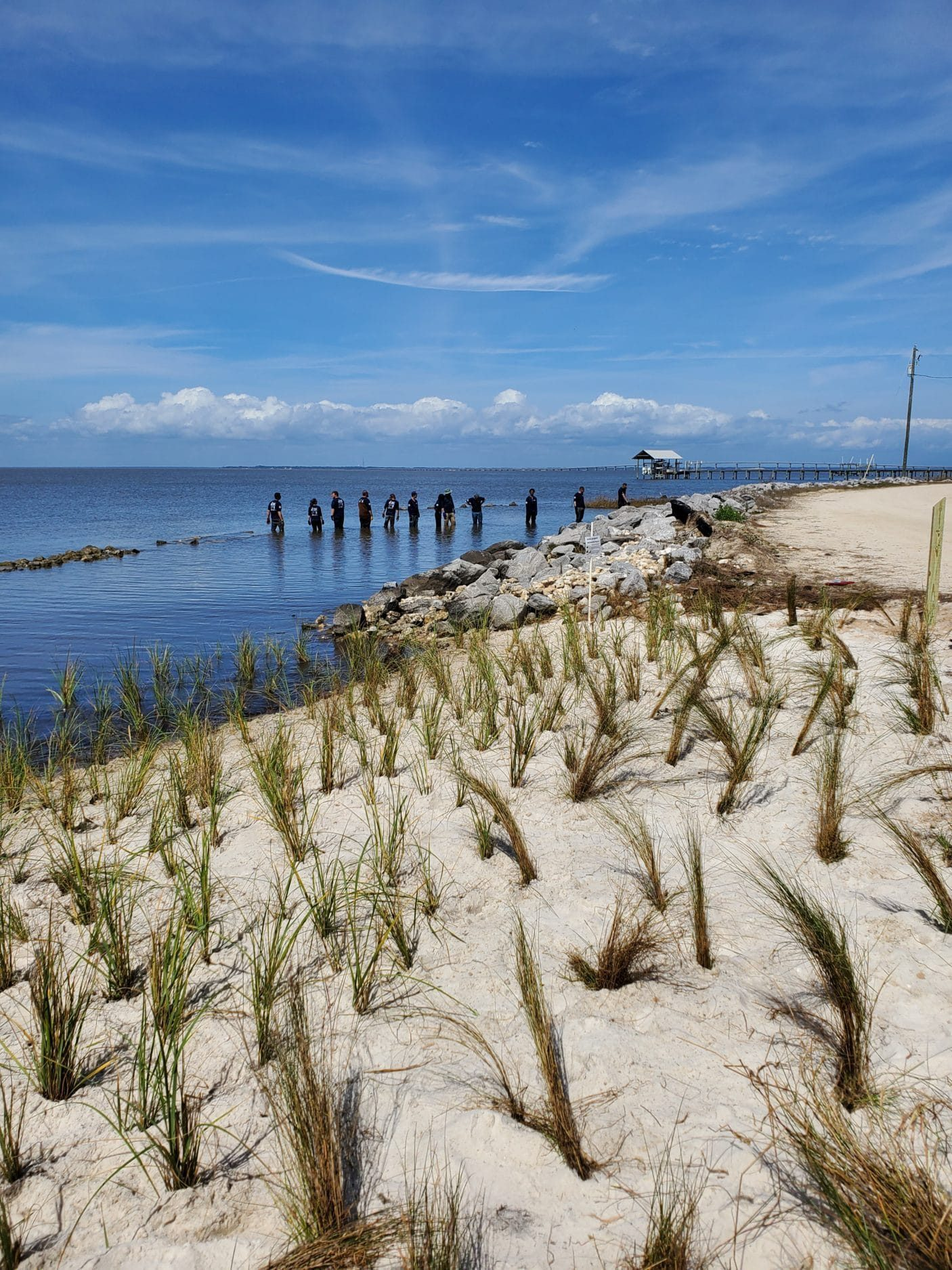 A 250' living shoreline was completed at Sawyer Street with the help of the Conservation Corps. Native marsh plants, were planted to stabilize the shoreline and promote habitat